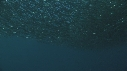 205003-11-53-52-20-SARDINES-DAUPHINS-BAIT_BALL
