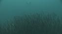 205006-10-08-22-23-SARDINES-REQUIN-BAIT_BALL-DAUPHINS