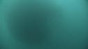 205007-10-03-39-19-FOUS-SARDINES-DAUPHINS