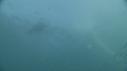 205007-9-19-41-04-FOUS-OTARIES-SARDINES-DAUPHINS