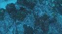 216023-23-07-42-03-CARANGUES-BARBER-ETOILE_DE_MER