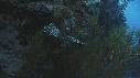 217012-12-01-03-16-CORAIL_NOIR-POISSON_LION