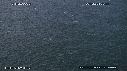 218503-6-05-57-08-BAIT_BALL-FOUS-DAUPHINS-BALEINE