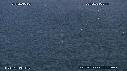 218504-7-04-09-15-BAIT-BALL-FOUS-DAUPHINS