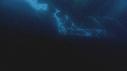 257113-16-17-37-15-ALGUES-ICEBERG