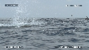 280504-5-32-23-06-DAUPHINS_SPINNER-FOUS