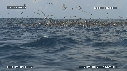 280504-5-37-07-23-DAUPHINS_SPINNER-FOUS