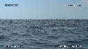 280504-5-46-52-13-DAUPHINS_SPINNER-FOUS