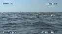 280504-5-47-52-14-DAUPHINS_SPINNER-FOUS