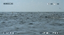 280504-5-51-21-02-DAUPHINS_SPINNER-FOUS