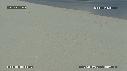 281501-1-08-00-19-BEBES_TORTUES_VERTES