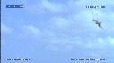 281502-2-07-19-13-BEBES_TORTUES-FREGATES